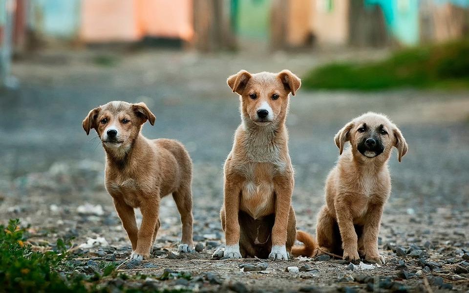 Pas godt på din hund
